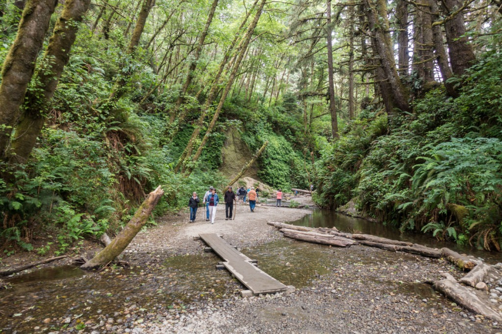Redwood: Fern Canyon Entrance