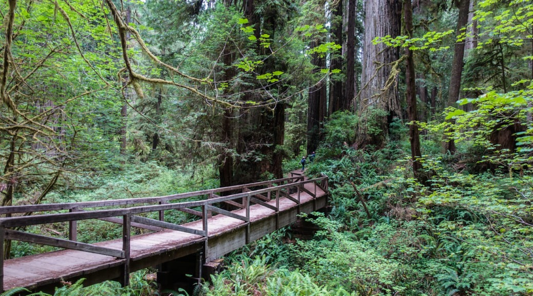Redwood: James Irvine Trail Crossing Prairie Creek