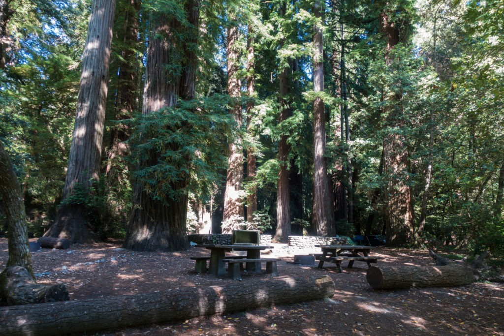 Redwood: Larger Campsites at Jedediah Smith Campground