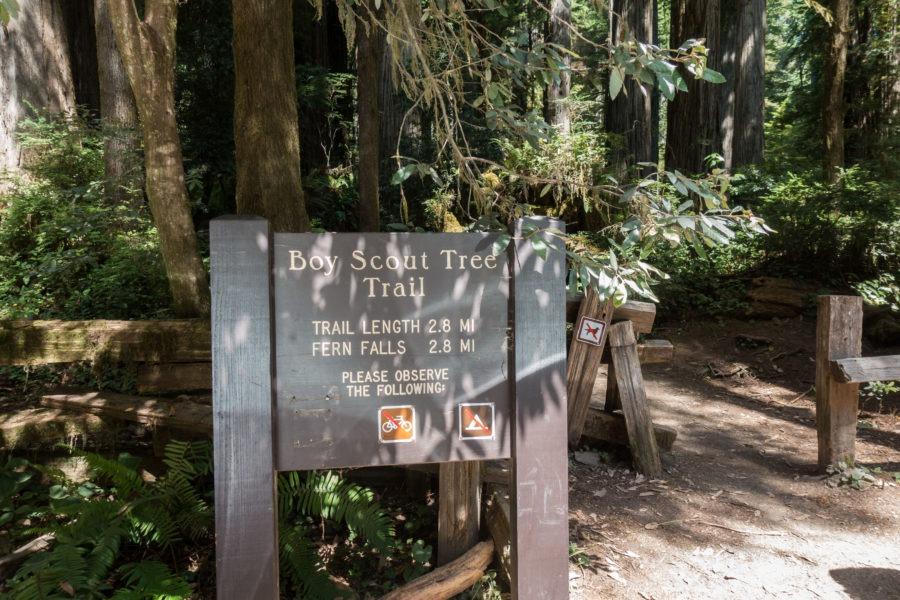 Redwood: Boy Scout Tree Trail