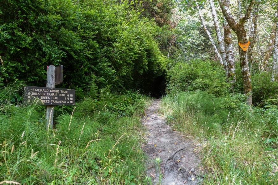 Redwood: Start of Emerald Ridge Trail
