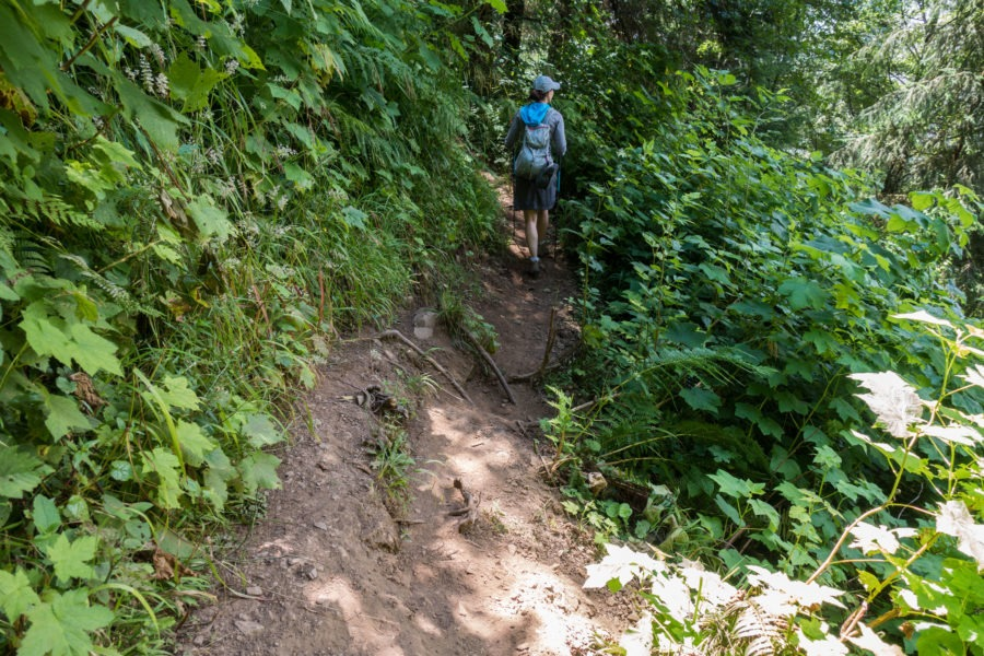 Redwood: Eroded Damnation Creek Trail