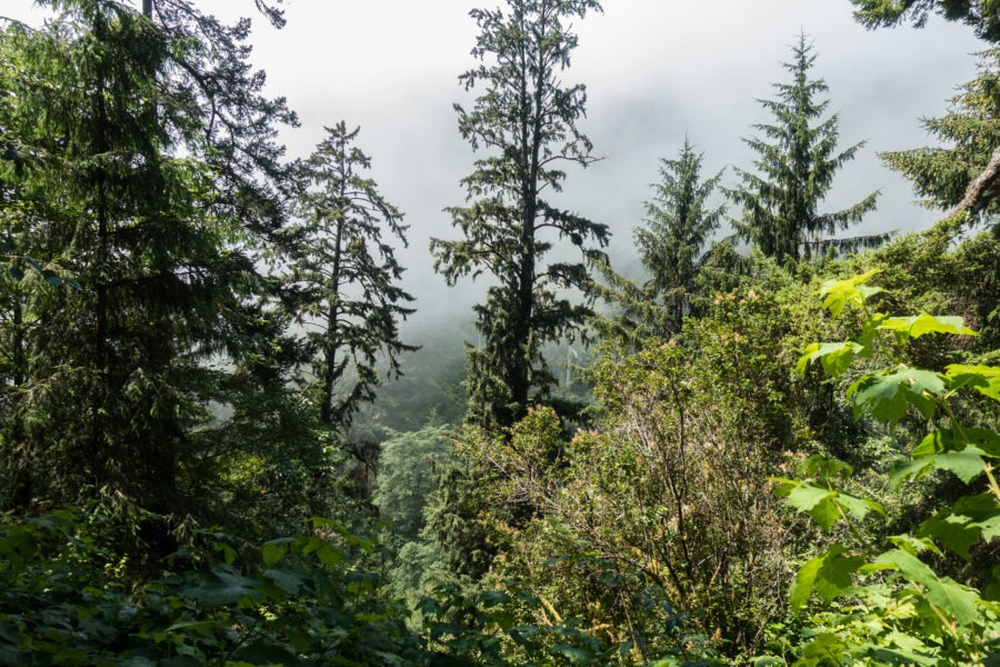 Redwood: Foggy Descent on Damnation Creek Trail