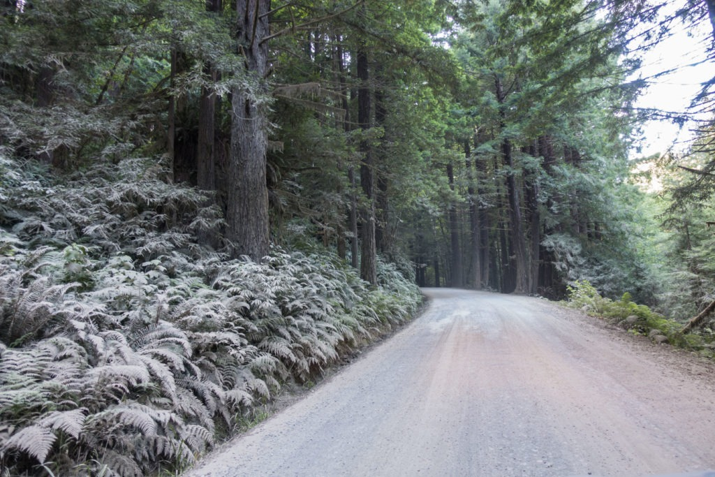 Redwood: Davison Road to Gold Bluffs Beach Campground