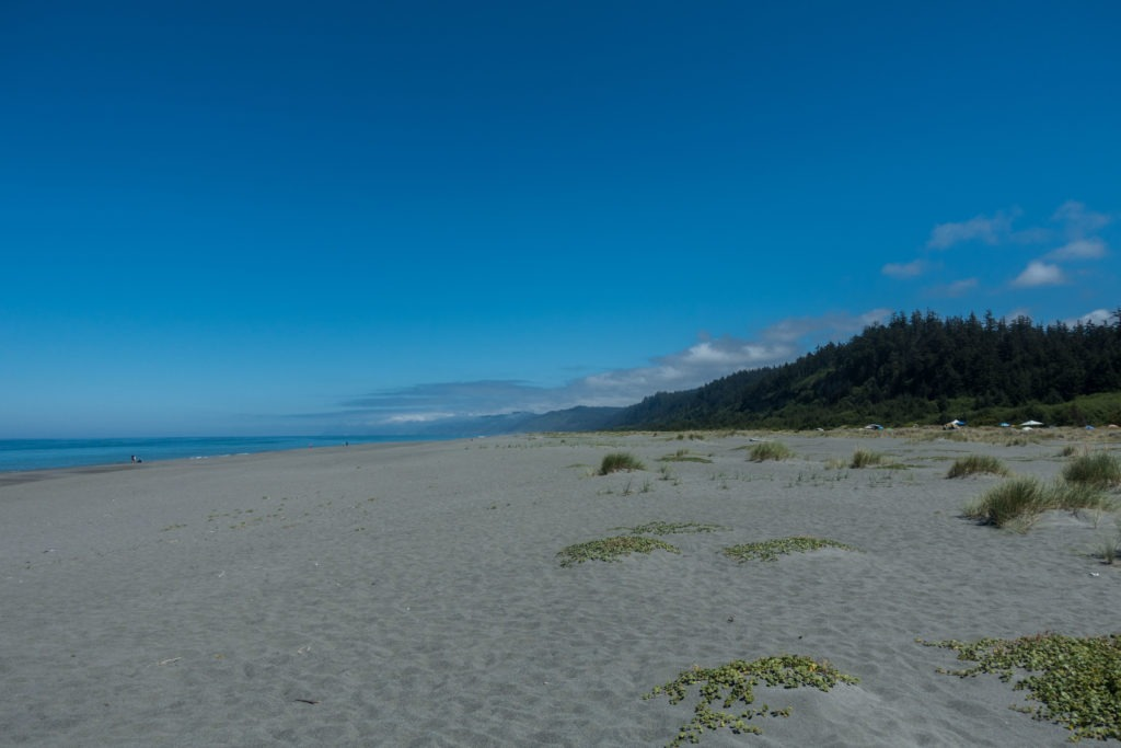 Redwood: Sunny Gold Bluff Beach