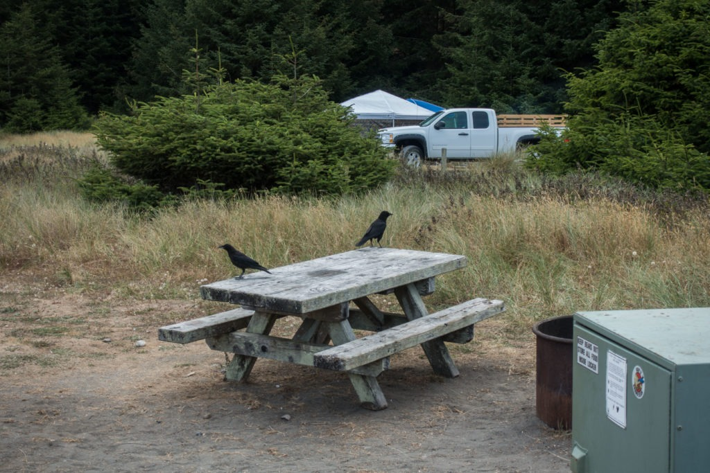 Redwood: Crows at Gold Bluffs Beach Campground
