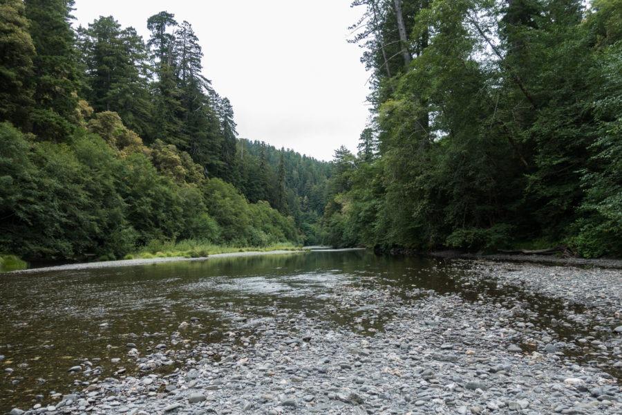 Redwood: View Upstream on Redwood Creek
