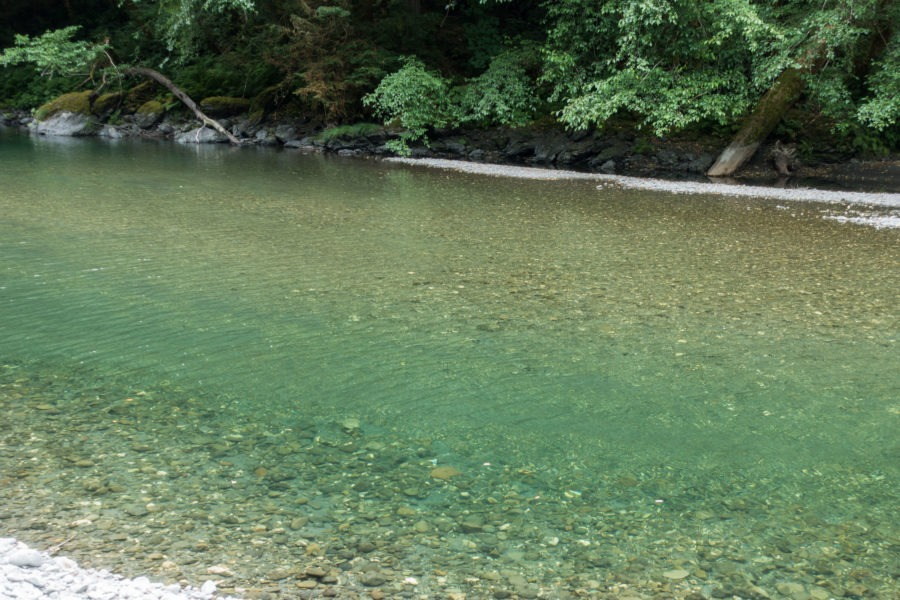 Redwood: Clear Green-Blue Waters of Redwood Creek