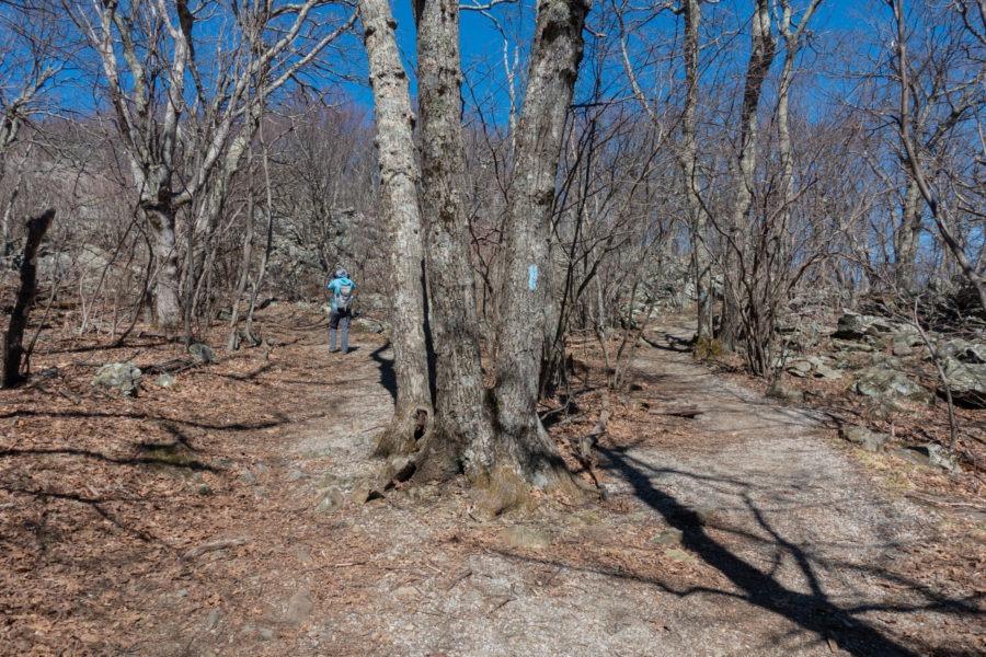 Shenandoah: Stony Man Trail Loop Fork