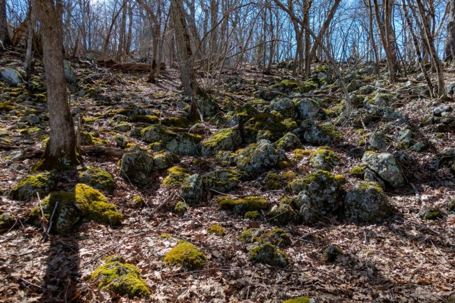 Shenandoah: Mossy Rocks on Stony Man Trail