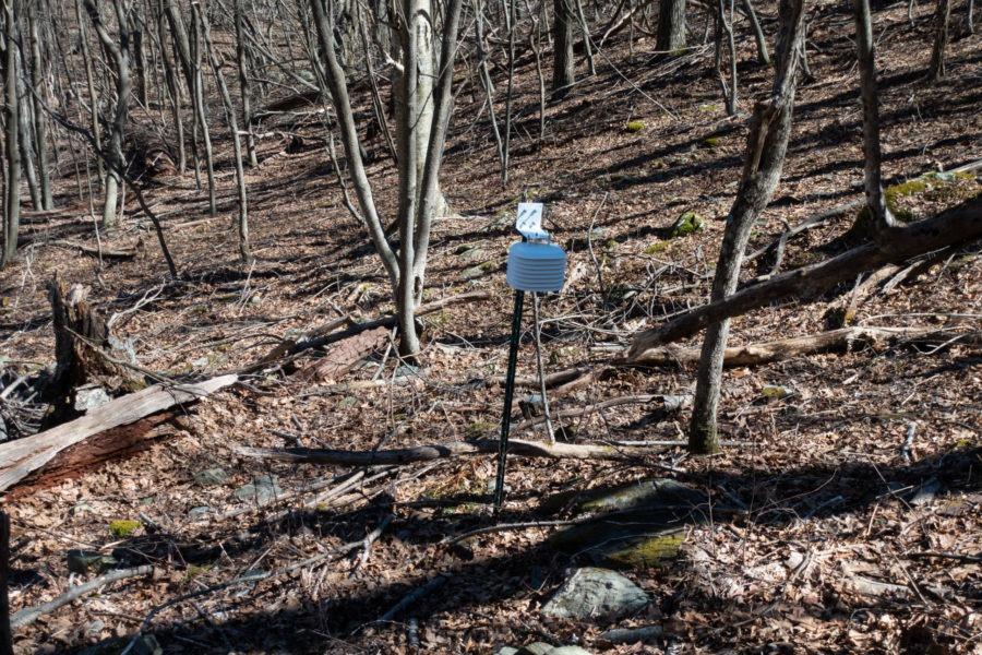 Shenandoah: Salamander Stations on Stony Man Trail
