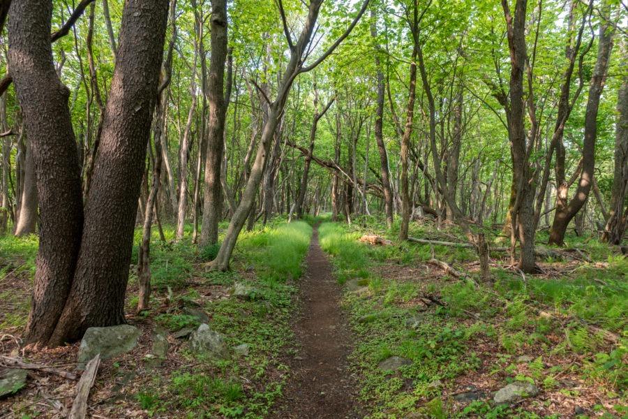 Shenandoah: Appalachian Trail Near Milam Gap