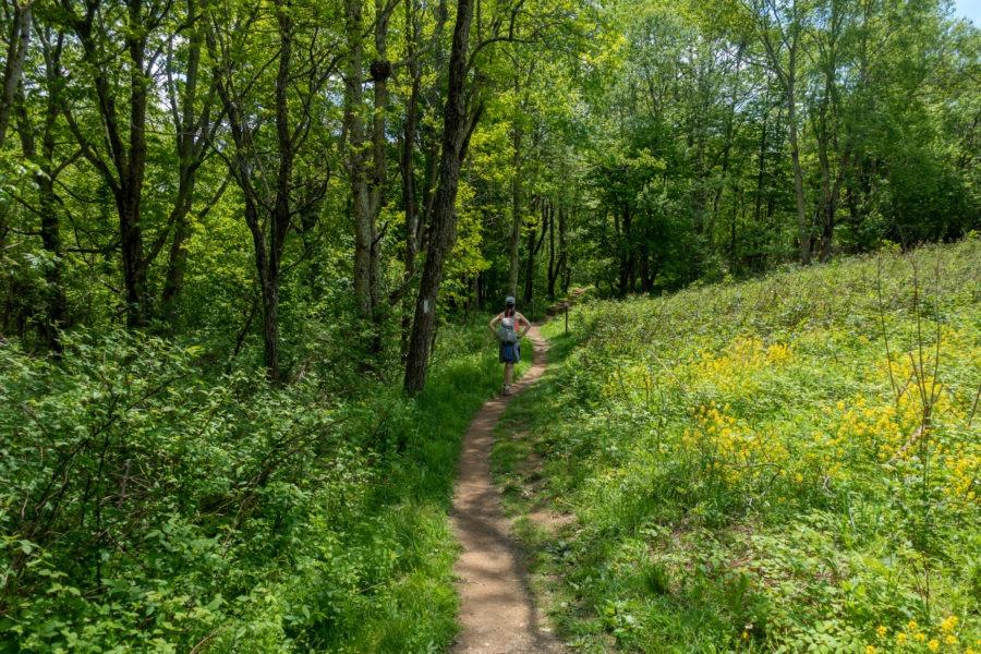 Shenandoah: AT at Milam Gap
