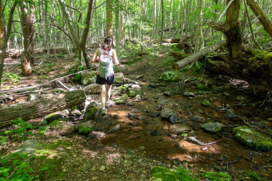 Shenandoah: Crossing Stream Over Laurel Prong Trail