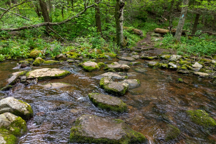 Shenandaoh: Mill Prong Stream Crossing