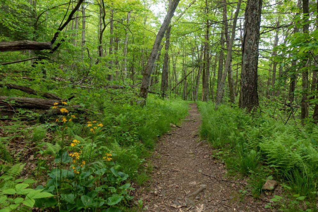 Shenandoah: Mill Prong Trail