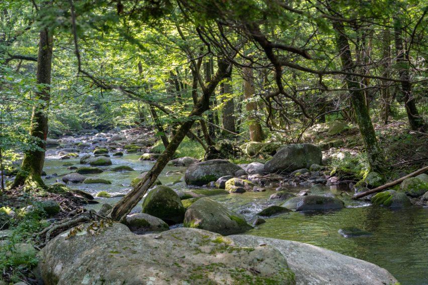 Shenandoah: Hughes River Along Nicholson Hollow Trail