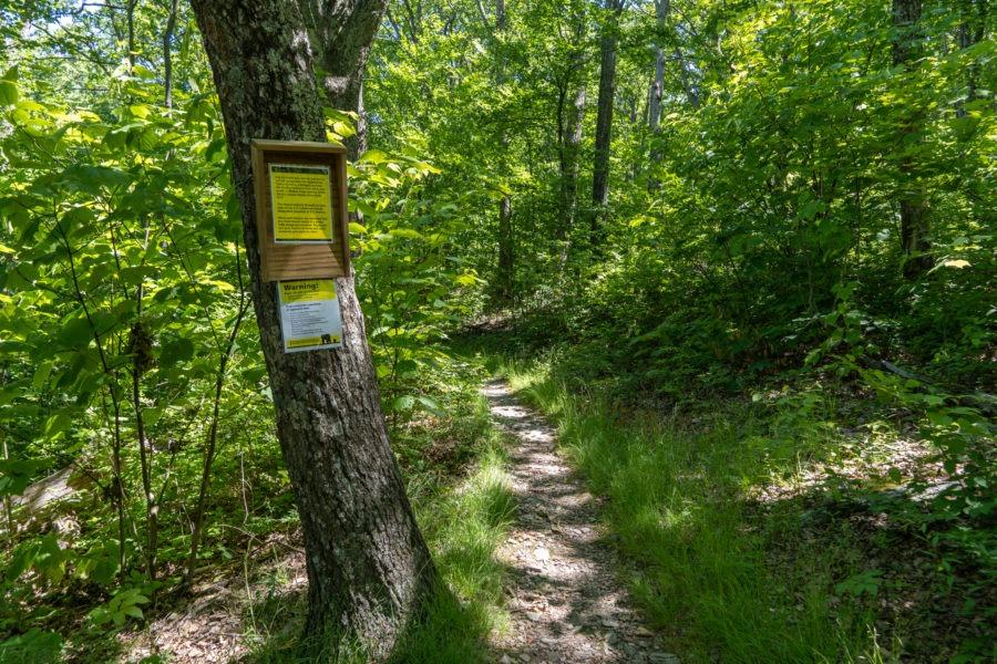 Shenandoah: Intersection of Wildcat Ridge and Appalachian Trail