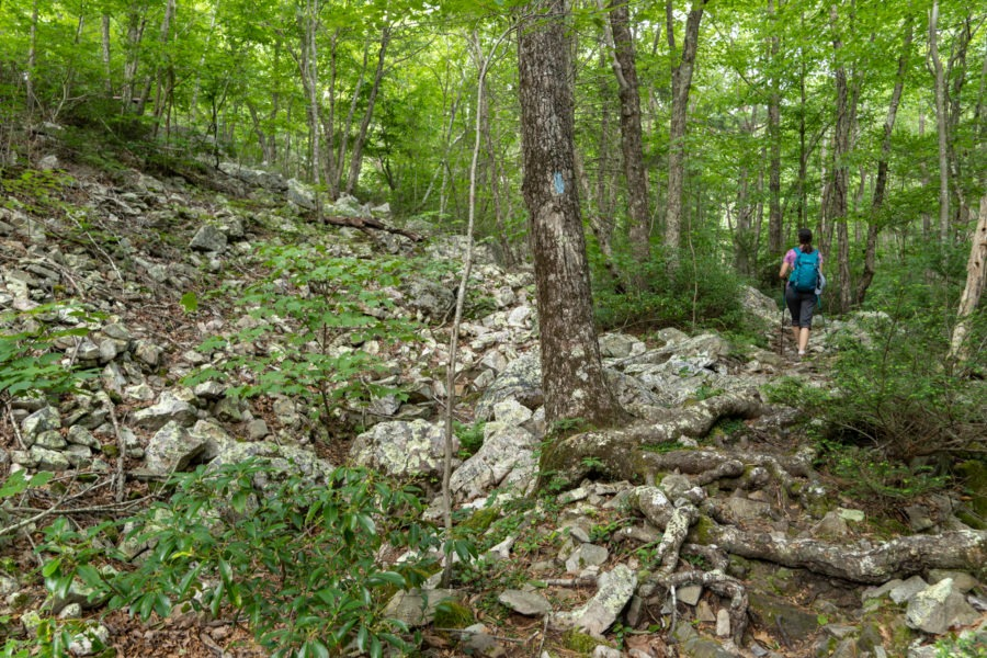Shenandoah: Hiking on Wildcat Ridge Trail