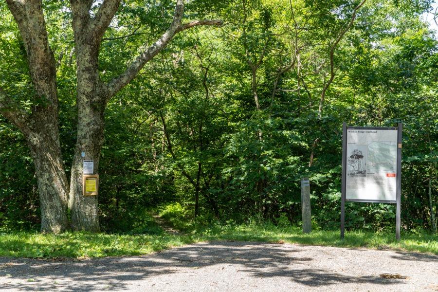 Shenandoah: Wildcat Ridge Trailhead