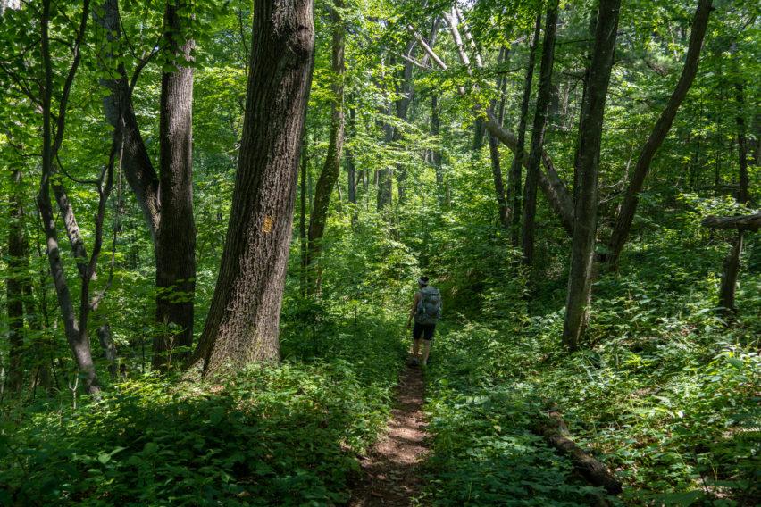 Shenandoah: Descending Hazel River Trail