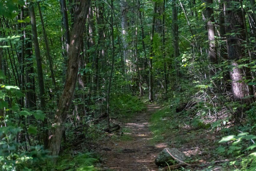 Shenandoah: Hazel Mountain Trail