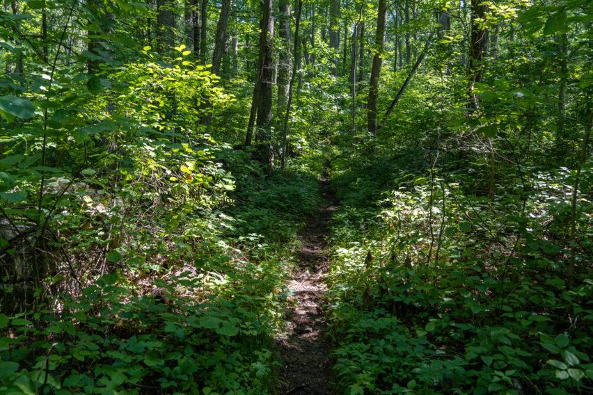 Shenandoah: Hot Mountain-Short Mountain Trail