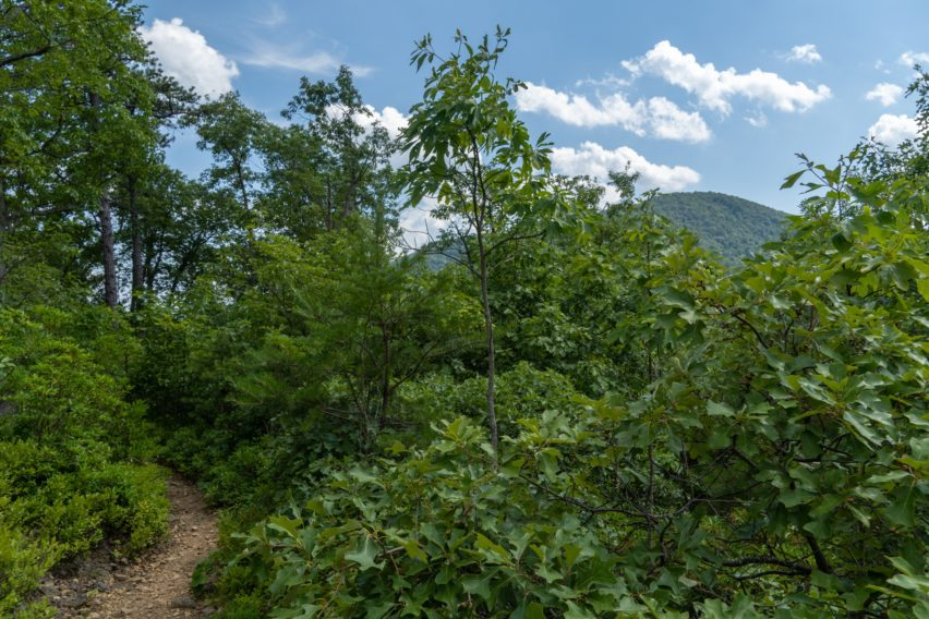 Shenandoah: View From White Rocks Ridgeline