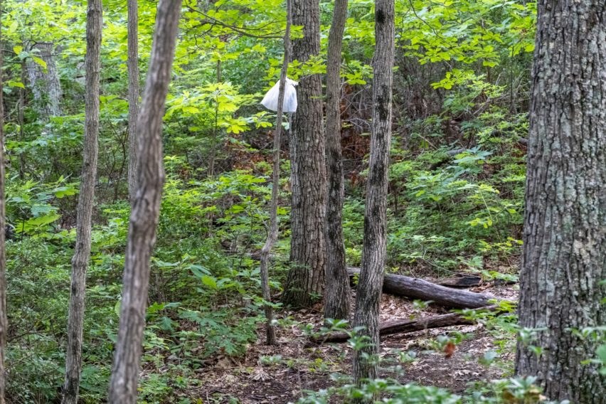 Shenandoah: Terrible Example of a Bear Bag
