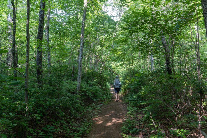 Shenandoah: West on White Rocks Trail